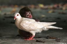 Monkey prepares to attack bird